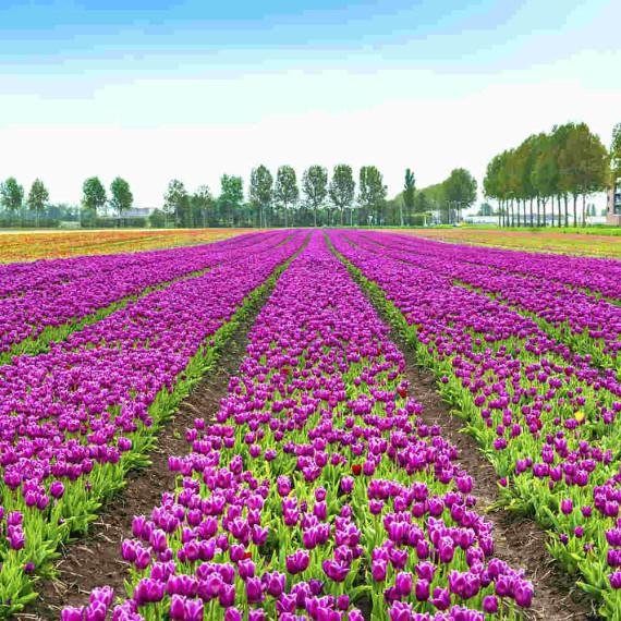 Blumenanbieter