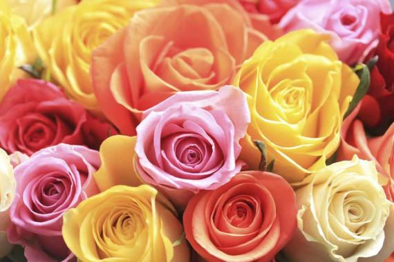 Farbe der Rosen und ihre Bedeutung | Muttertag Blumen 2018