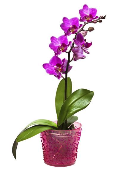orchideen im blumentopf