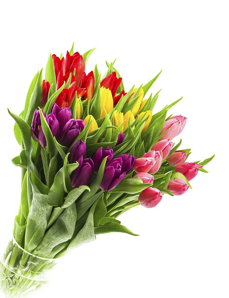 tulpen-strauss